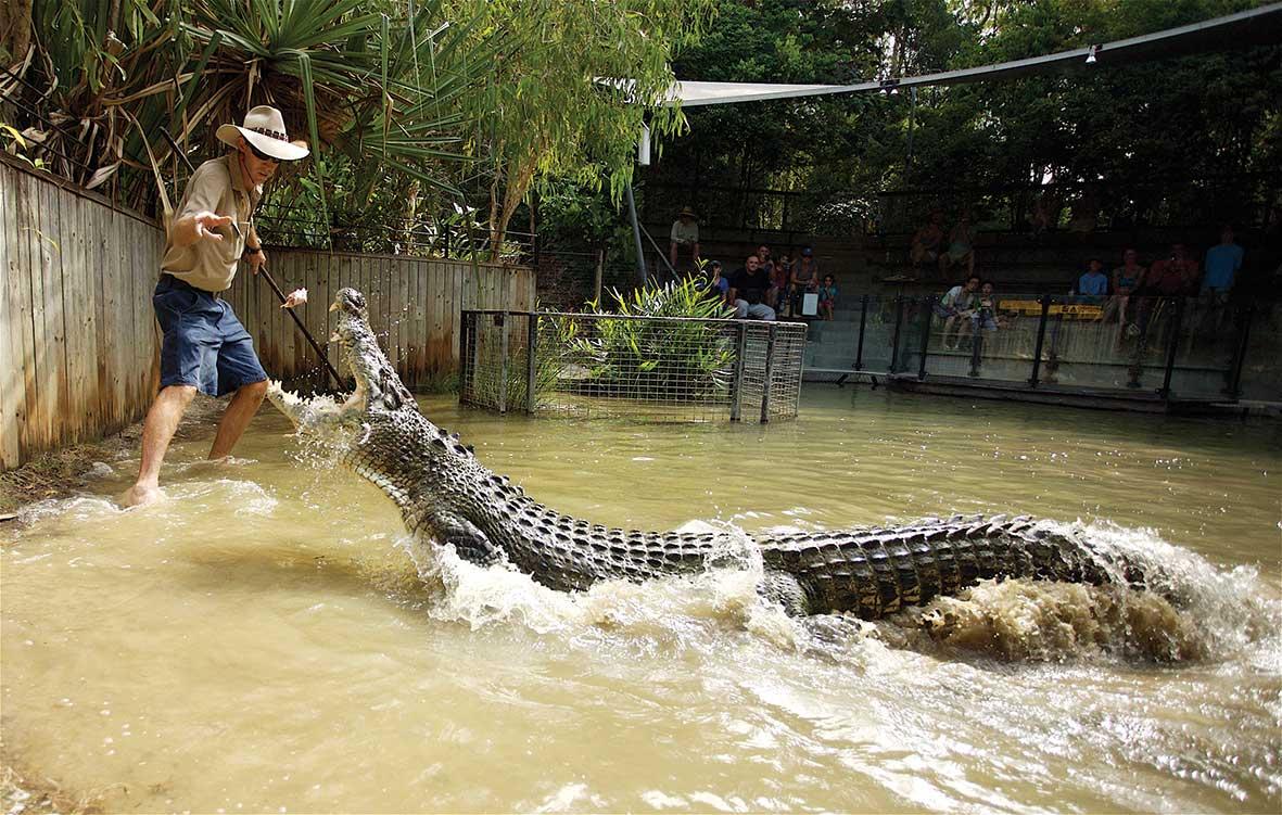 Hartleys Crocs